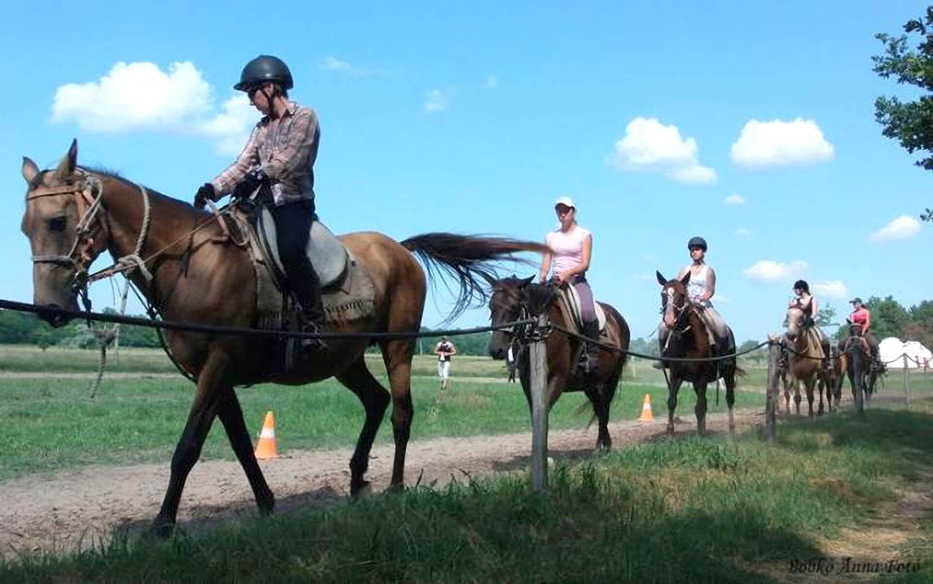 akhalozott lovaink (75%, 50%-osak)